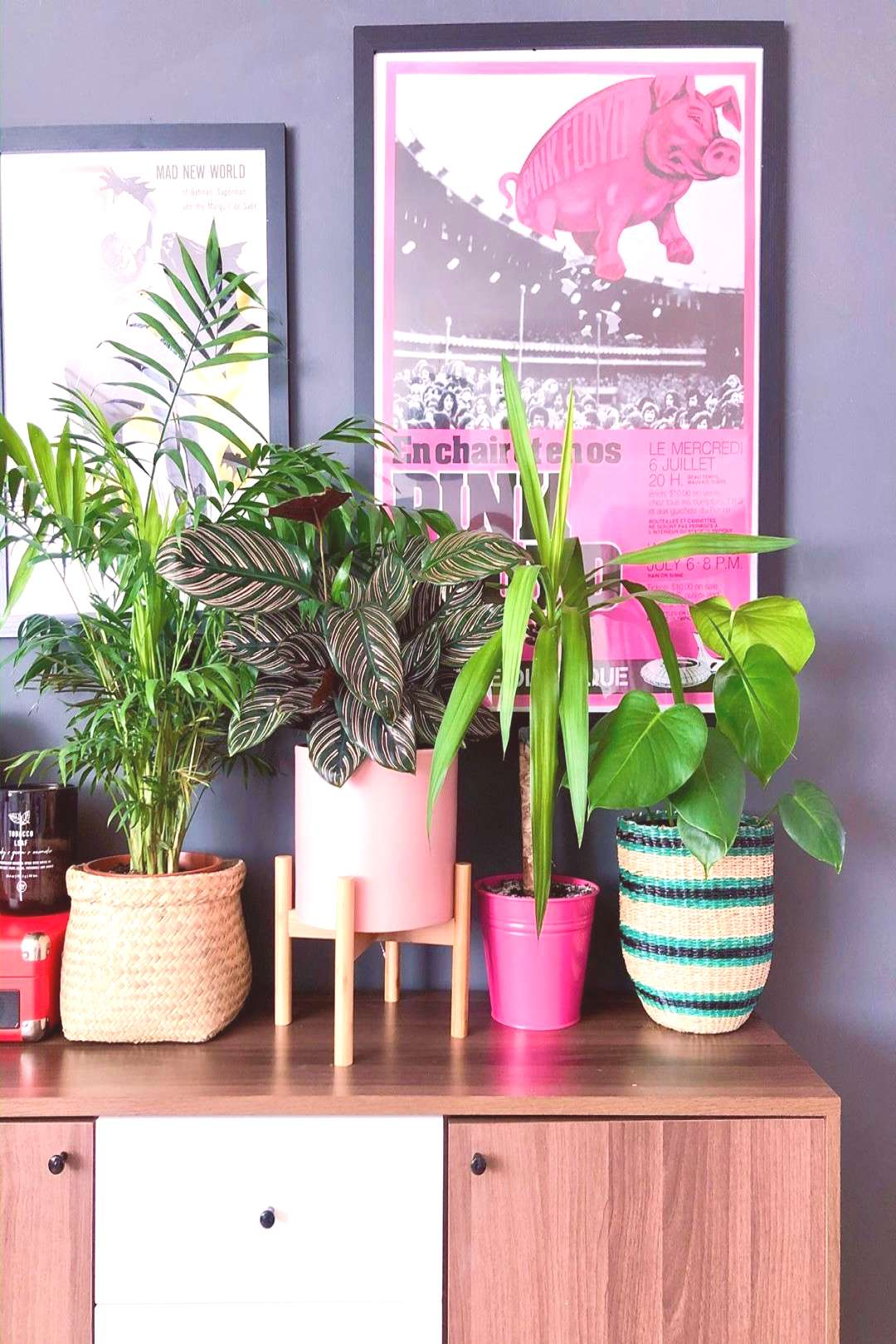 1 person, plant and indoor
