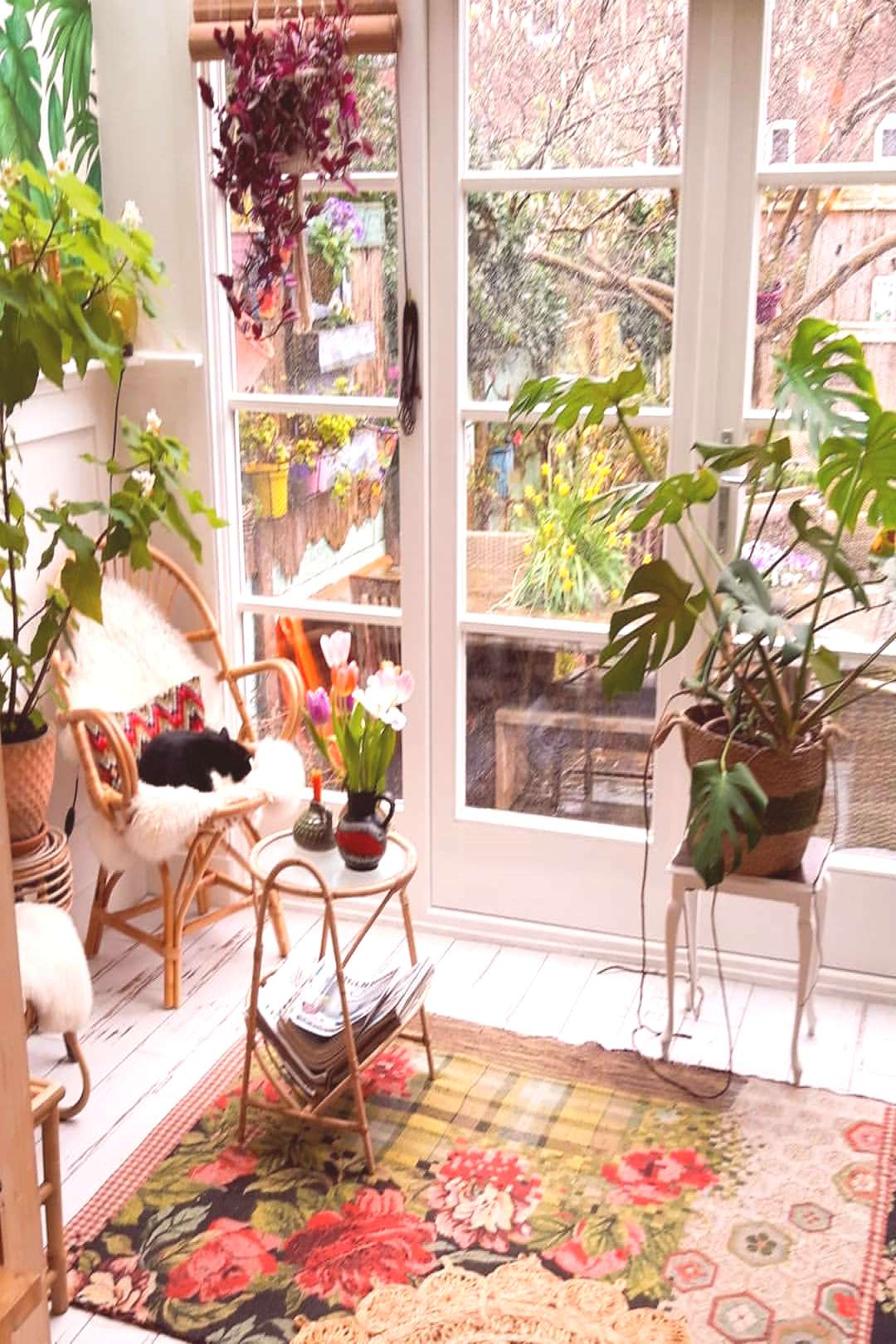 plant, table and indoor
